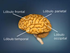 Descubriendo qué es la demencia